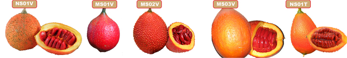 Kinds of gac fruit