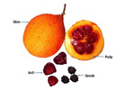 Fatty acids and carotenoids in gac fruit